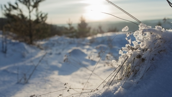 Grass Covered With Snow At Sunset