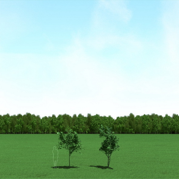 3DOcean Maple Acer Trees 3D Models 12089577