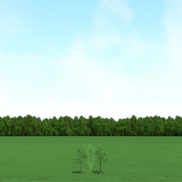 3DOcean Willow Salix Trees 3D Models 12089824