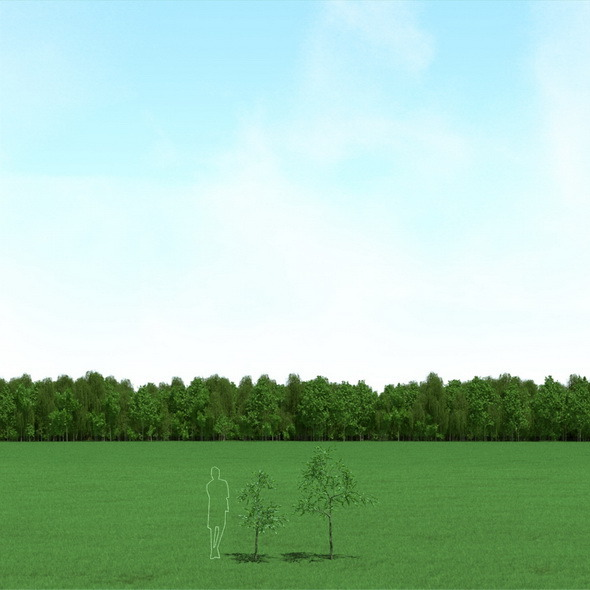 3DOcean Willow Salix Trees 3D Models 12089857