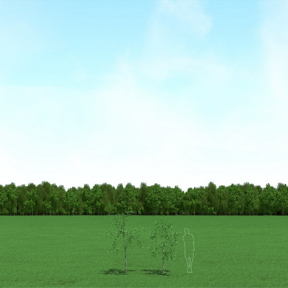 3DOcean Willow Salix Trees 3D Models 12089924