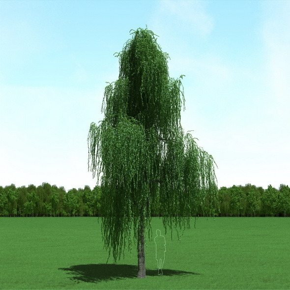 3DOcean Willow Salix Tree 3D Model 12090115