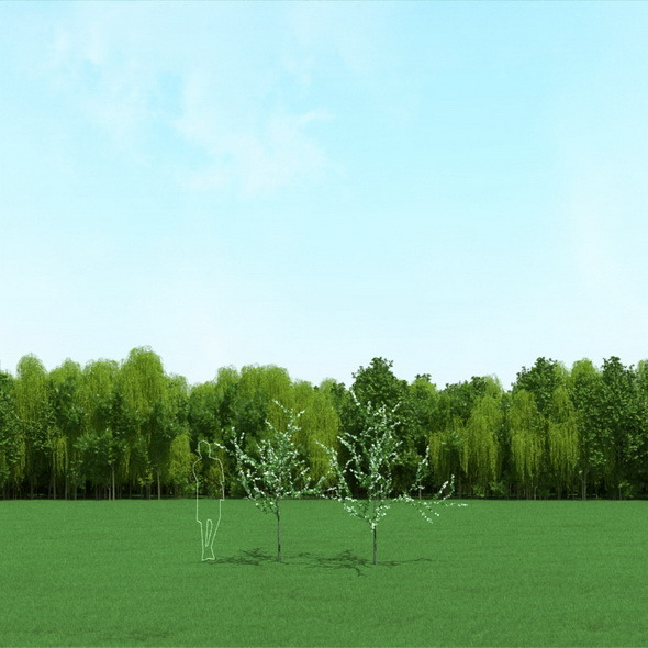 Blooming Cherry Tree 3d Models - 3DOcean Item for Sale