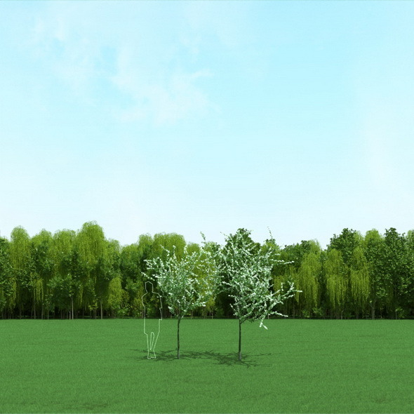 3DOcean Blooming Cherry Tree 3D Models 12090641
