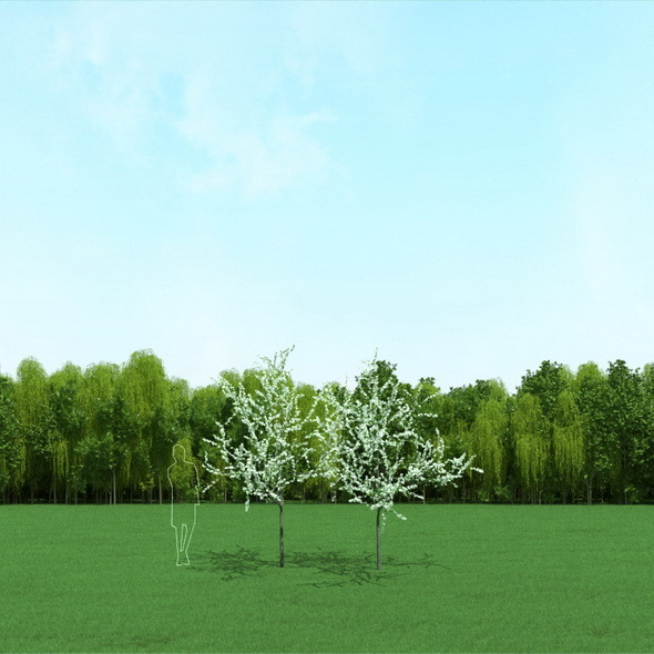 3DOcean Blooming Cherry Tree 3D Models 12090658