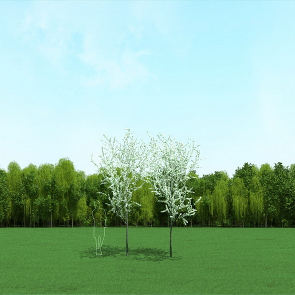 Blooming Cherry Trees 3D Models