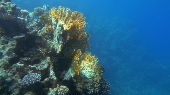 Undersea World And Coral Reef Dwellers
