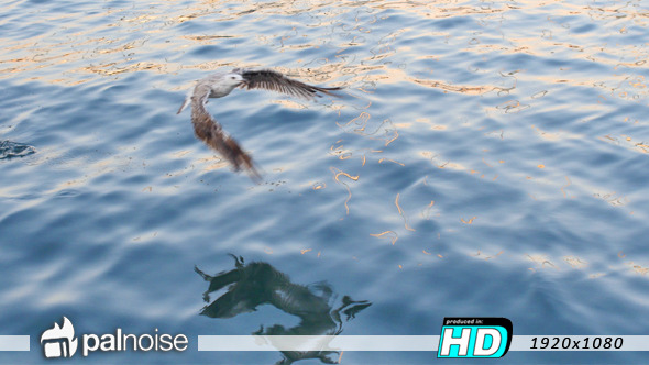 VideoHive Bird Fly Water Sea 12112061