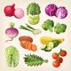 Set of Colorful Vegetables