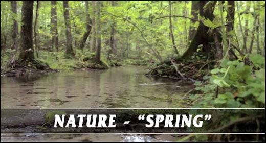 Nature - Spring