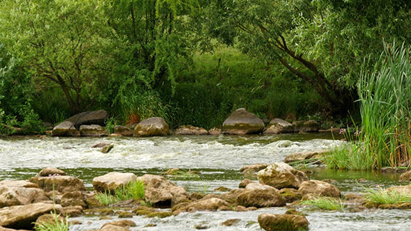 VideoHive Landscape Of The River With Stones And Plants 12157612