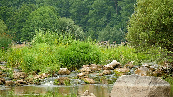 VideoHive Landscape Of The River With Stones And Plants 12157624