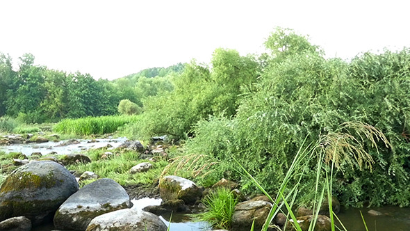 VideoHive Landscape Of The River With Stones And Plants 12157642