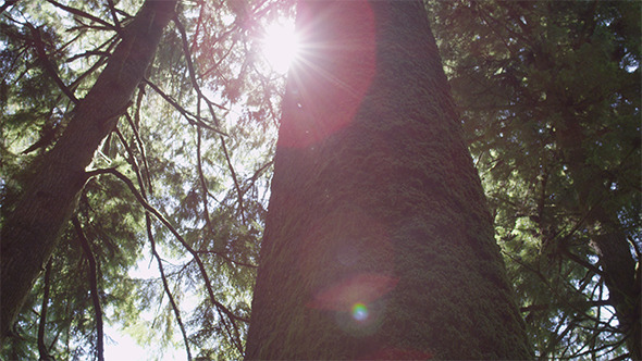 VideoHive Mossy Tree Lens Flare 12165637
