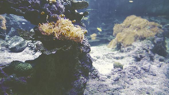 VideoHive Underwater 12173174