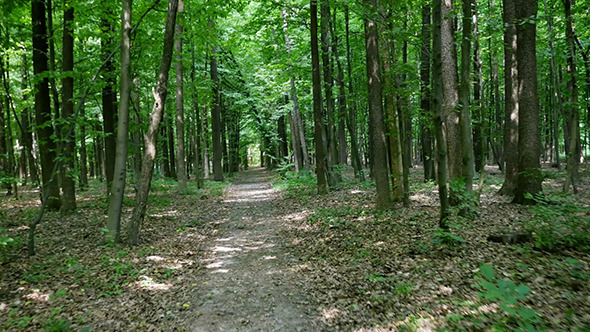 VideoHive Walking On Forest Trail 12174185