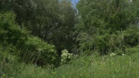 VideoHive Grove Bushes Forest Lush Grass 12174827