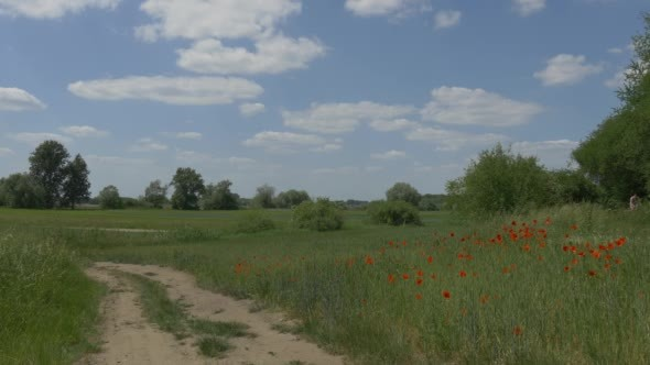 VideoHive Dusty Road Through Green Field Red Poppies 12174977