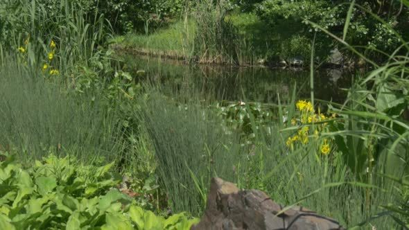 VideoHive Overgrown Pond River Banks 12177523