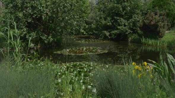 VideoHive Swampy Pond in the Park Water Lilies 12177814