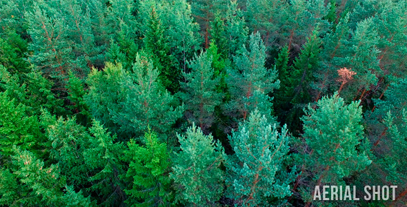VideoHive Forest Aerial Shot 12179260