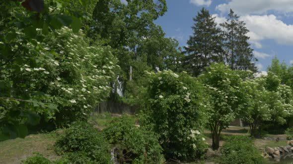 VideoHive Mallard Wild Ducks on the Meadow in the Zoo 12180183