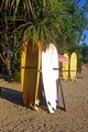 Surfboards Under Palm Tree - PhotoDune Item for Sale
