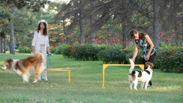 VideoHive Two Girls With Dogs 12186243