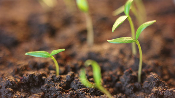 VideoHive Plants Rotating to the Sun 12186363