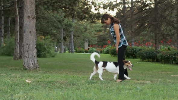 VideoHive Dog Runs Under The Foot Of The Girl 12186984