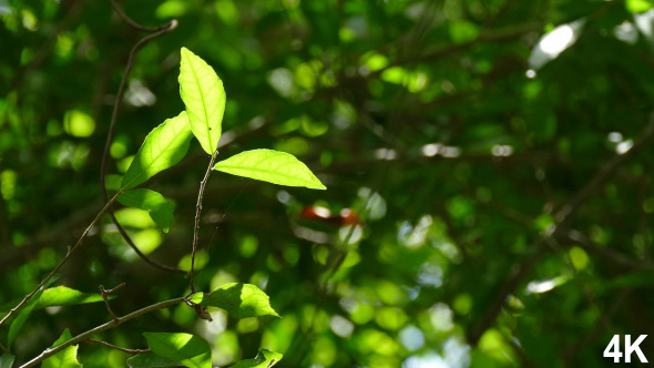 VideoHive Foliage Nature 12187017