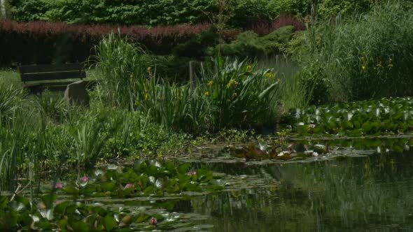 VideoHive Rippling Pond s Water Lilies Islands Bushes 12188903