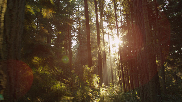 VideoHive Northwest Forest 12189415