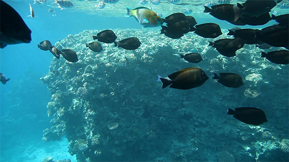 VideoHive Variety of Fish in Tropical Waters of Egypt 12189451