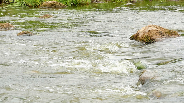 VideoHive Fast Flowing River With Stones In The Water Slow 12193026