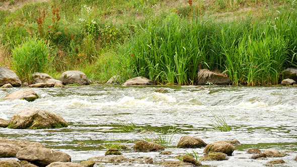 VideoHive Landscape Of The River With Stones And Plants 12193282