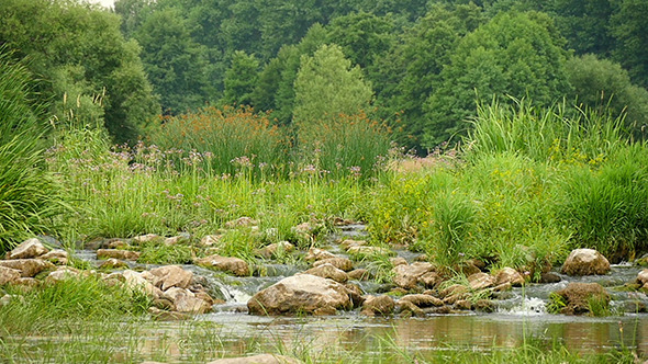 VideoHive Landscape Of The River With Stones And Plants Slow 12193464