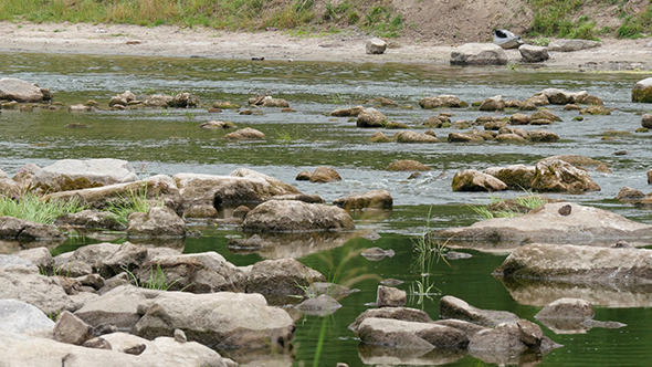 VideoHive Landscape Of The River With Stones And Reeds 12193620