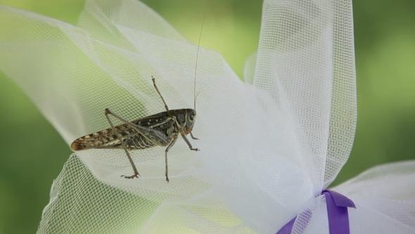 VideoHive Locust 12206675