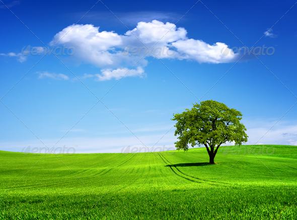 PhotoDune Tree 1223672