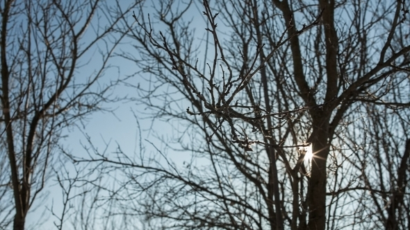 VideoHive Sun Shines In Tree Branches 12218795