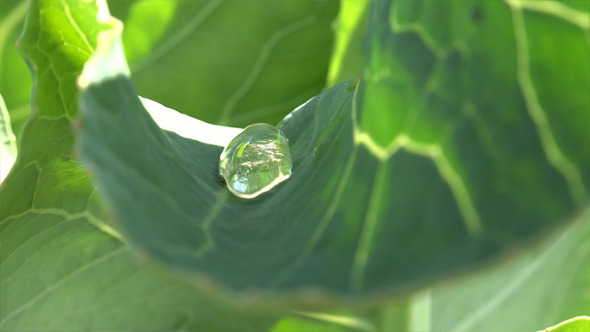 VideoHive Dew Drops on a Leaf 3 12222841