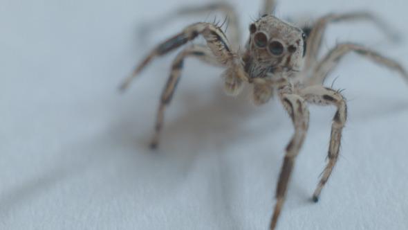 VideoHive Spider 12222970