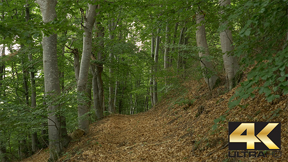 VideoHive Trail in the Beech Forest 12229156