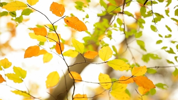 VideoHive Autumn Leaves 12229726