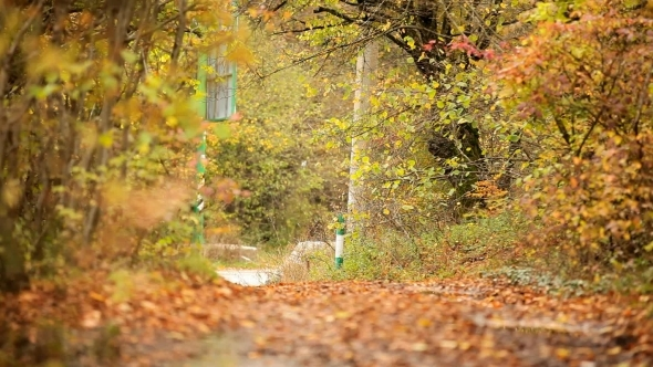 VideoHive Autumn Forest To The Road 12229758