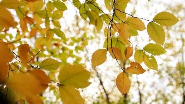 VideoHive Branch With Yellow Leaves 12229802