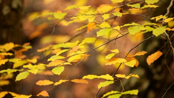 VideoHive Branch With Leaves 12229880