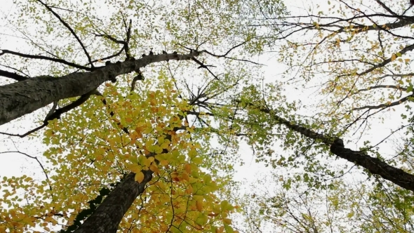 VideoHive Tree-Tops 12229914