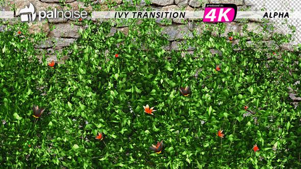 VideoHive Ivy & Orange Flowers Growing 12237072